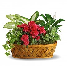 Plants: Plants Galore Basket