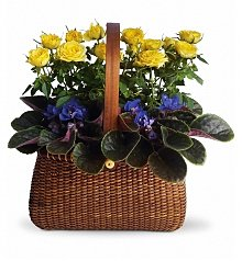 Plants: Garden To Go Basket